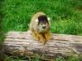 Monkeys & primates