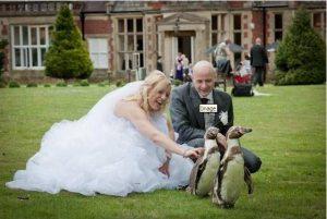 Penguin wedding3