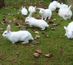 White Rabbits2