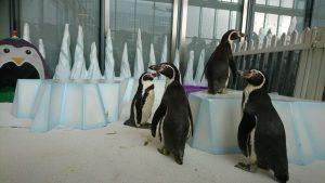 penguin party winter wonderland