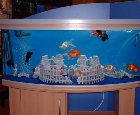 Fancy Goldfish Bow Front Tank