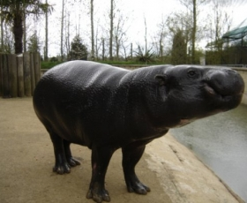 Hippo – Cicho