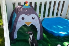 Penguins Assorted Animal Party
