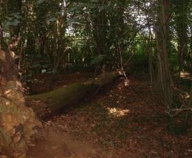 Woodland at HZG