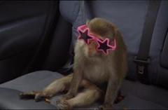 Peter Kay's Car Share Rhesus Monkey