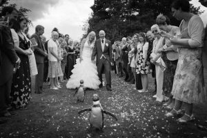 Penguin wedding4