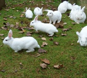 White Rabbits2