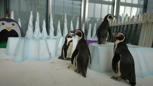 penguin party winter wonderland