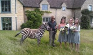 wedding with zebra