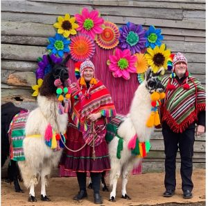 Llama Fiesta (2)